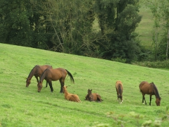chevaux, vallée, wimereux, vélo, randonnée, souverain, moulin