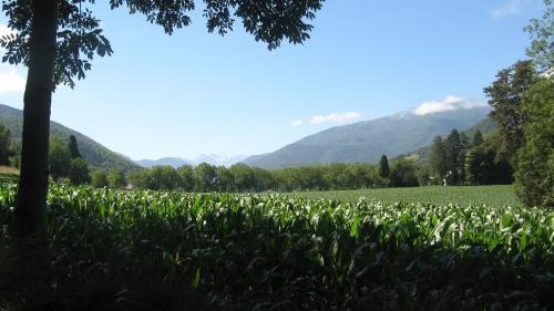 La France est magnifique - Champ de mais devant les Pyrenees.JPG