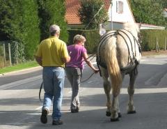 cheval, boulonnais, brimeux, pas-de-calais, randonnée, vélo, vtc